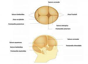 Fontanelle craniche del neonato, immagine rappresentativa della loro posizione e dell'anatomia del cranio del bambino. Si notano suture craniche, ossa craniche e fontanella.
