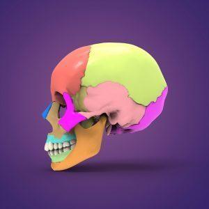 Sutura coronale del cranio del neonato; divide l'osso frontale dal parietale.